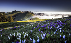 Morning Mood (Frederic Huber | Photography) Tags: morning sunset sun mist mountains alps flower field fog rural sunrise canon landscape schweiz switzerland spring highlands big cabin long exposure mood sonnenuntergang nebel suisse suiza swiss feld crocus berge lee nd bern usm alpen filters polarizer svizzera blume landschaft sonnenaufgang sr morgen 70200 berner stimmung bernese dreamscape krokus frhling stopper 1124 emmental berneroberland langzeitbelichtung oberland 1635 krokusse 2470 eggiwil emmenthal leefilters rmisgummen frederichuber canon5dsr wwwfrederichubercom frederichubercom rmisgummen