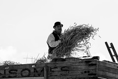 Hay fever (KevPBur) Tags: blackandwhite man thread vintage farm wheat cereal bowlerhat harvester thresher threshing harvesting canon650d canon70200mmf28lisiiusm canonrebelt4i canonkissx6i theroyalcountyofberkshireshow2015