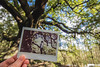 Ai piedi dell'Ilice (Flavia-cyb) Tags: albero etna sicilia bosco leccio secolare zafferana ilice carrinu