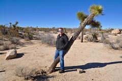 Standing Over Joshua (Blue Rave) Tags: california park trees people male guy nature hiking joshuatree hike dude diagonal jeans bluejeans mate bloke joshuatreenationalpark 2016 jtnp meninjeans archrocktrail