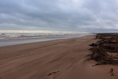 Blowing Sand,Sands of St Cyrus,St Cyrus National Nature Reserve_jan 16_682 (Alan Longmuir.) Tags: aberdeenshire grampian blowingsand stcyrus shiftingsands sandsofstcyrus stcyrusnationalnaturereserve