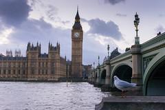 Big Ben's Bird (keelanshaw) Tags: uk sunset england bird london westminster evening big nikon time ben watching parliament 70200mm d3100