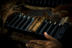 _62A0874 (gaujourfrancoise) Tags: cuba carribean tabac cigars tobacco cigares carabes tobaccoleaves feuillesdetabac gaujour