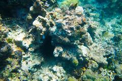Sea Urchin, Jamaica (ncs1984) Tags: travel canon island bay ngc jamaica tropical caribbean montegobay montego 6d caribbeansea canonef1635mmf28 canonef1635f28 canon6d