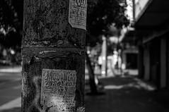 Aviso (Oxkar G) Tags: chile street blanco 50mm calle sony negro slt calor industar providencia ruso russianlens a37 avenidabilbao