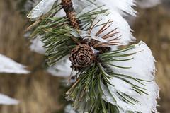 _MG_1098 (schamrock77) Tags: winter italy mountain ice freezing natura inverno montagna friuli ghiaccio galaverna canon6d 35f2is