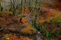 _DSC3498 (andoni.guridi) Tags: winter españa spain enero bosque invierno euskadi oñati gipuzkoa basoa 2016 hayedo negua urtarrila araotz degurixa