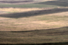 Fields (Grzesiek.) Tags: field pattern pole agriculture patchwork rolnictwo