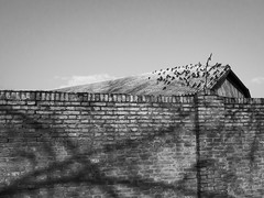 (Stella Trasforini) Tags: blackandwhite bw italy birds blackwhite noir shadows streetphotography fineartphotography