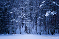 tree of Misyaka pond (nakashy) Tags: trees winter white snow color colour tree nature japan canon landscape photography eos photo pond 5d nagano 70200mm 2016 canoneos5dmarkiii 5dmk3 5d3