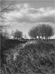 Flevopolder, Lelystad