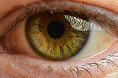 Eye (thomas.hartmann496) Tags: iris newyork eye look ball see photo lashes eyelashes unitedstates troy eyeball seeing anatomy sight pupil lash cornea