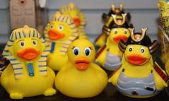 Ducky Meets Egyptian And Samurai Friends! (RiverCrouchWalker) Tags: oxford ducky pittriversmuseum samuraiduck helloducky egyptianduck whereswellyorhelloduckytoday