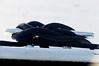 D3200-0010-Edit (old guy 05) Tags: sunrise reflections river landscape boats harbor nc dock nikon waterfront ships northcarolina shrimpboats calabash coastalwaterway easterncarolina calabashnc d800e richstrobel