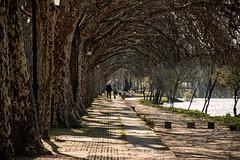 paseo en Ponte de Lima (Pat Celta) Tags: parque paisajes primavera portugal landscape spring nikon d70 paisaje nikkor18140mm
