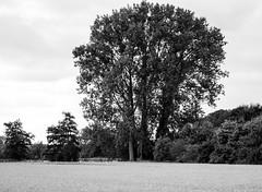 Baum/Tree#10_B&W (Siggi-Dee) Tags: bw friedhof white black tree cemetery fog see blackwhite nikon stream wasser fuji nebel forrest tokina fujifilm tamron fluss wald bume fujinon strom baum hdr x10 schwarzweis xpro1 d7000 18270mm 18mmf2 27mmf28 siggidee 1224mm18105mm siegda