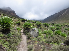 IMG_0927 (John Steedman) Tags: africa trek kenya afrika kenia afrique eastafrica mountkenya ostafrika     afriquedelest