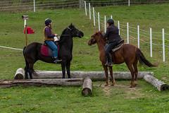 DSCF0362.jpg (Ed Traywick) Tags: horses horse leo robyn obstacles horseclinic