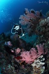 Coral Garden (Randi Ang) Tags: coral canon garden indonesia photography eos underwater angle wide dive scuba diving fisheye ang gili lombok randi meno 6d seafan