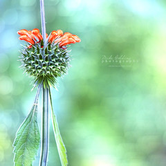 The Passers By (Mike Golding) Tags: flowers orange green nature bokeh vibrant natureycrap