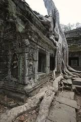 Ta Prohm (picturesfrommars) Tags: cambodia kambodscha siem reap pro f2 12mm angkor wat ta walimex prohm samyang rokinon a6000