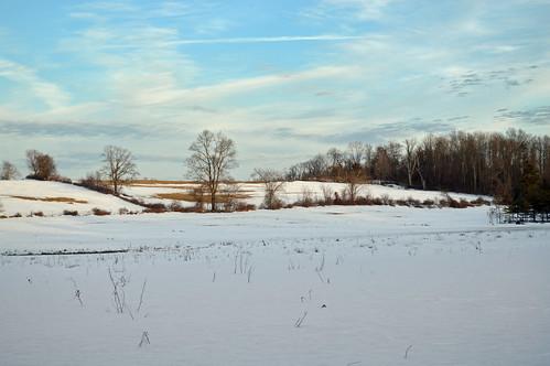 Berkshire Meadow in Winter