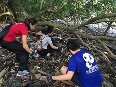 20-Env&CivSoc-World-Water-Day-LCK-Cleanup-26Mar16 (Habitatnews) Tags: mangrove capt nus worldwaterday limchukang iccs