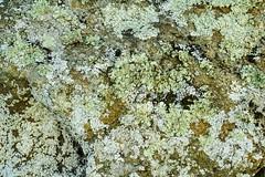 DSC06009 (Duncan Riach) Tags: tree rock lichen