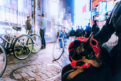 Urban Dog - https://500px.com/photo/145562885/ (KT.pics) Tags: street city family people urban dog pet holiday cute face animal silhouette japan night lights tokyo shiny moments cityscape emotion bokeh shibuya coco nervous resting exploration lifestyles 500px ktpics 500pxtours