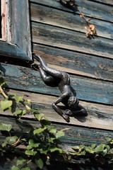 Lying on the wallStyphnolobium japonicum Golden Standard - Arboretum Kalmthout (stephenmid) Tags: belgium kalmthout