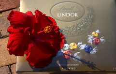 Guess what I got for Easter? (Grenzeloos1) Tags: flower easter chocolate hibiscus lindor 2016