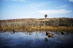 Ranthambore (Hitesh Savla) Tags: india deer rajasthan wateringhole primeval tigerreserve ranthamborenationalpark fujix100