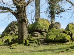 Stondtorre small tor on a spur SX 790807 Lustleigh Dartmoor (Bridgemarker Tim) Tags: trees boulders tors knowle eastdartmoorlesserknowntors stondtorre