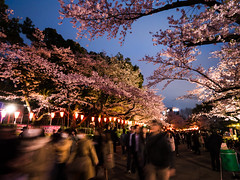 Blossoms in Gloam (H.H. Mahal Alysheba) Tags: park flower tree japan night cherry lumix tokyo ueno wide cherryblossom sakura lumixg 714mmf40 gx7
