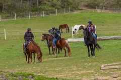 DSCF0311.jpg (Ed Traywick) Tags: horses horse leo robyn obstacles horseclinic