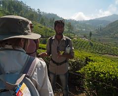 Our Munnar guide (Jackie & Dennis) Tags: kerala teaplantation munnar rwh ramblersworldwideholidays