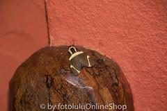 Argentinien_Insekten-90 (fotolulu2012) Tags: tierfoto