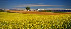 Le Printemps en Provence........ (Malain17) Tags: clouds fleurs montagne photography image pentax couleurs photographers ciel neige provence capture paysage arbre printemps lumire