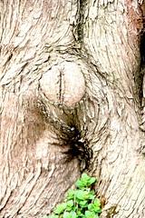 browns anatomy (joe.laut) Tags: tree anatomy april unprocessed 2016 joelaut