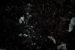 Aglio e Cenere-1 (Monumento) Tags: life stilllife color still pianta terreno naturamorta asper