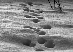 footprints (Stefan Giese) Tags: schnee bw canon finland spur track finnland tail spuren sw footprint 6d 24105mm fhrte schwazweiss fusspuren