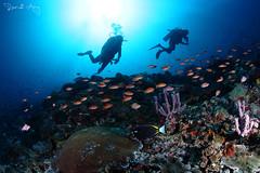 Anthias (Randi Ang) Tags: bali canon indonesia photography eos underwater angle wide dive scuba diving fisheye ang 15mm nusa randi 6d nusapenida penida toyapakeh