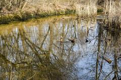 DSC_4816 (kabatskiy) Tags: city urban lake nature landscape spring dump minimal marsh abstracts