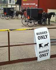 buggies only (brown_theo) Tags: county ohio horse creek country walnut amish buggy holmes buggies