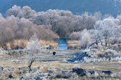 Winter morning walks (Justin S Reid) Tags: trees winter light white mountain nature sunrise person stream colours hoarfrost frosty lonely 500px wbpa ifttt arifunsal dierjscreensaver