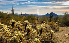 Cholla (Ron Drew) Tags: park arizona nikon scottsdale d200 mcdowellsonoranpreserve lostdogtrail