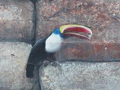 San Francisco Zoo (53) - 19 April 2016 (John Oram) Tags: toucan mural sanfranciscozoo 2002p1100216