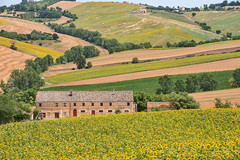 Country landscape in Marches (Italy) (clodio61) Tags: summer italy panorama house plant flower color tree green nature field horizontal farmhouse rural landscape photography italian europe day outdoor farm country hill scenic meadow july nobody sunflowers land agriculture marches cultivated beautyinnature rollinglandscape