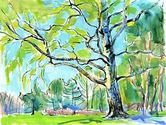 02-05-16s (Irina V. Ivanova) Tags: park plant tree green ink watercolor landscape sketch spring bright outdoor drawing saintpetersburg pleinair 365sketches