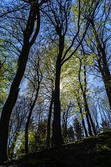 Hinter dem Grn (Manuel Eumann) Tags: nature landscape spring nikon natur sunny landschaft sonne frhling flensburg wideangel weitwinkel d610 1835mm manueleumann